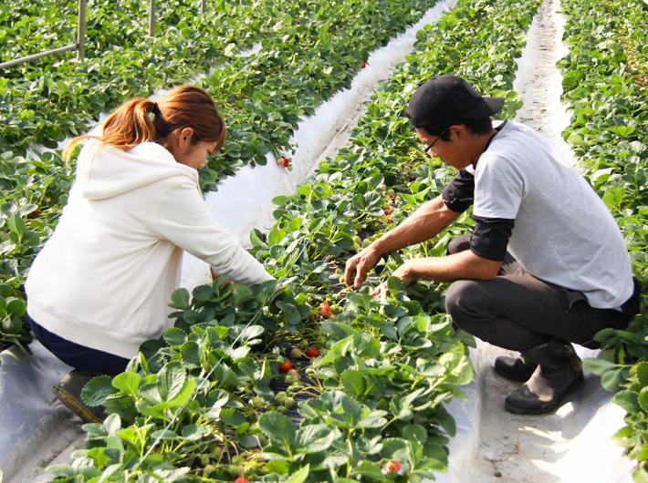 マイナビ農業にて「ハイブリッドアップシート」記事UP!<うるう農園さんで導入>