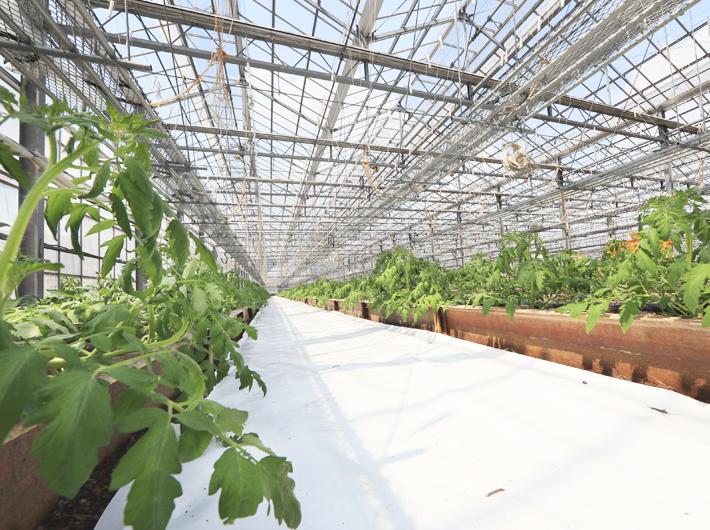 マイナビ農業に「ハイブリッド・アップシート」記事掲載